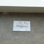 Balænoptera dentifola by AJT