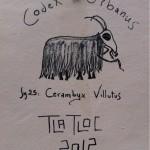 Cerambyx Villutus by Tlatloc