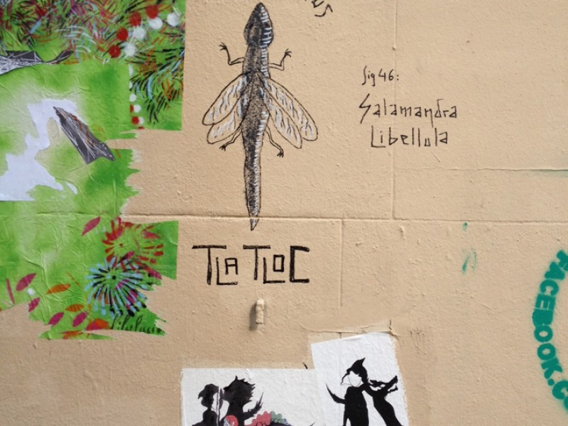 Salamandra Libellula by Tlatloc