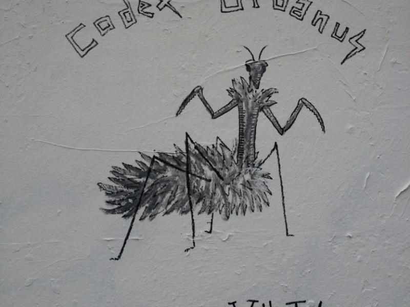 Mantis Villutis