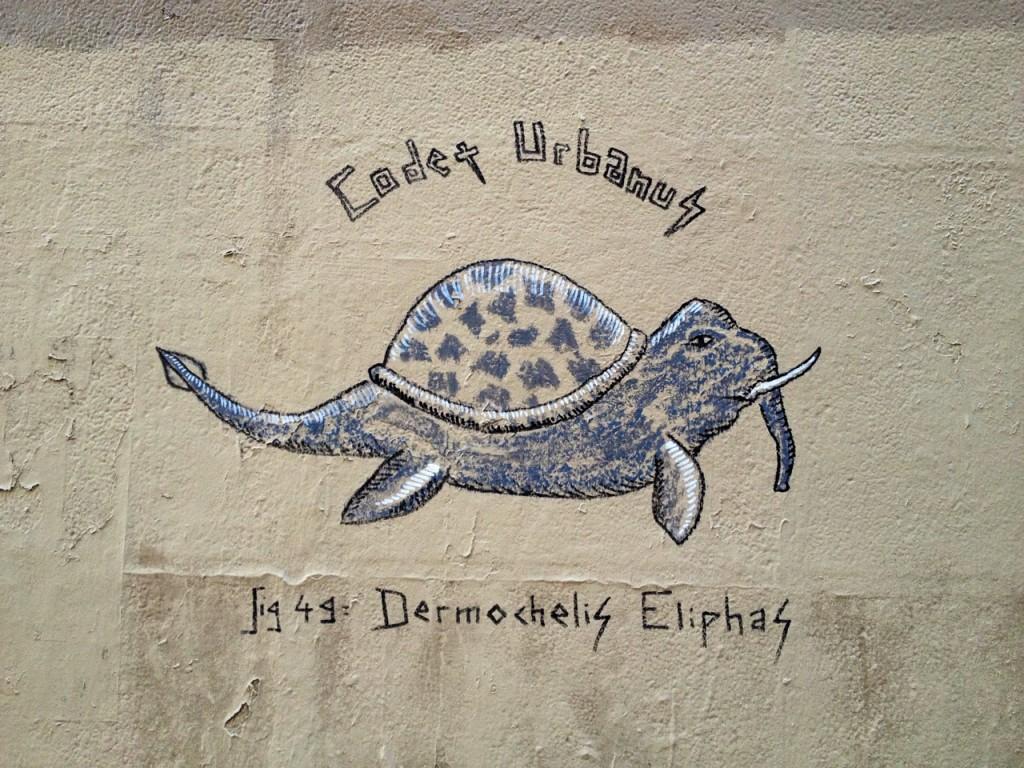 Dermochelis Eliphas