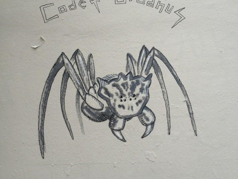 Vanna's Spider (Aranea Vannae)