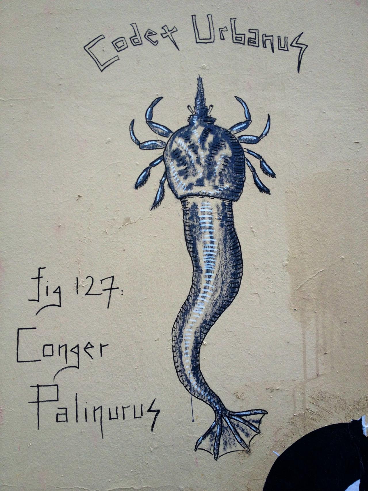Conger Palinurus