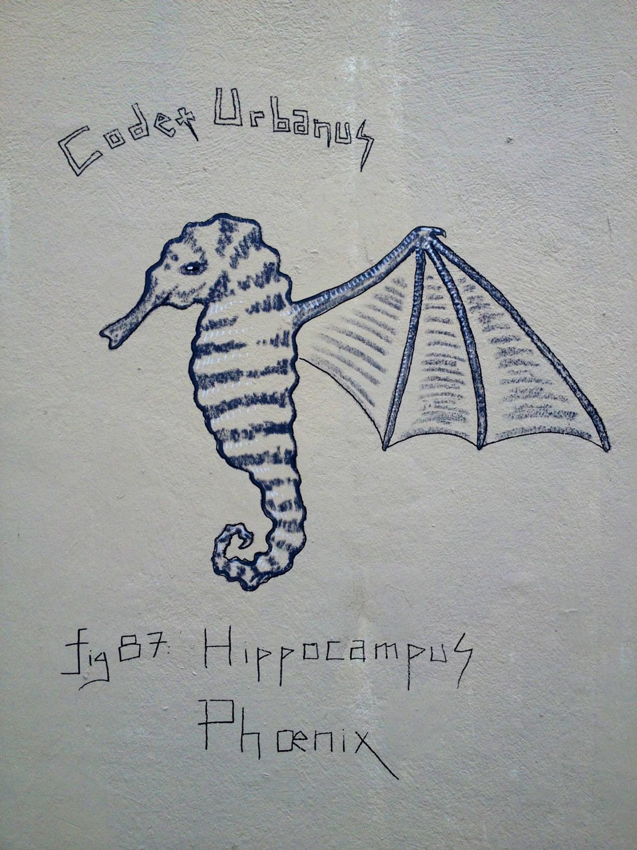 Hippocampus Phœnix