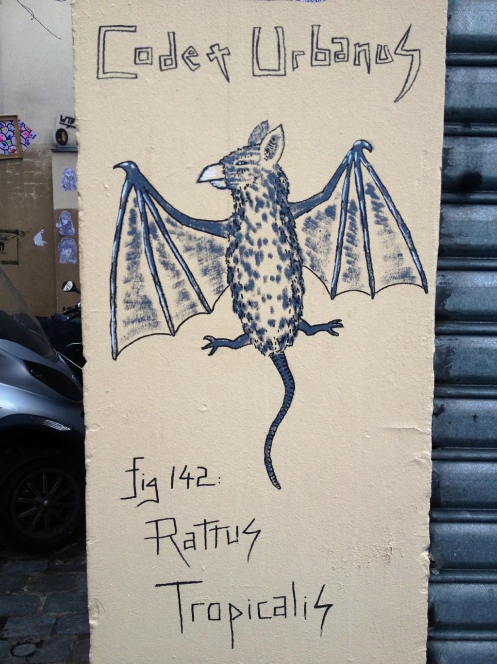 Rattus Tropicalis