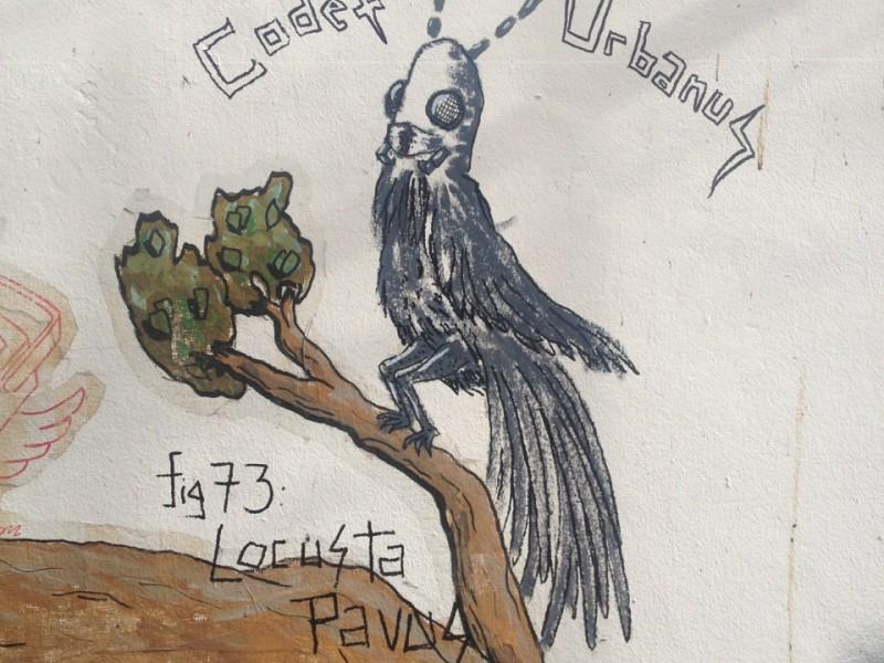 Locusta Pavus