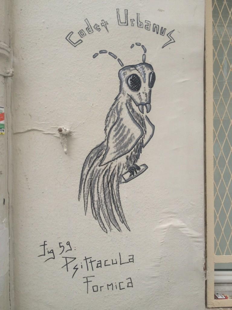 Psittacula Formica