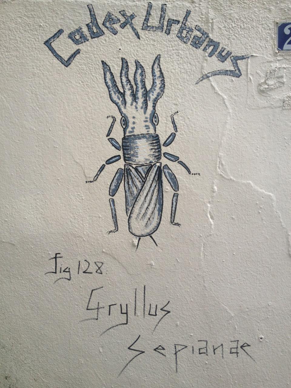 Gryllus Sepianæ
