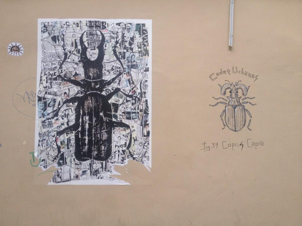 Copris Capra (2)