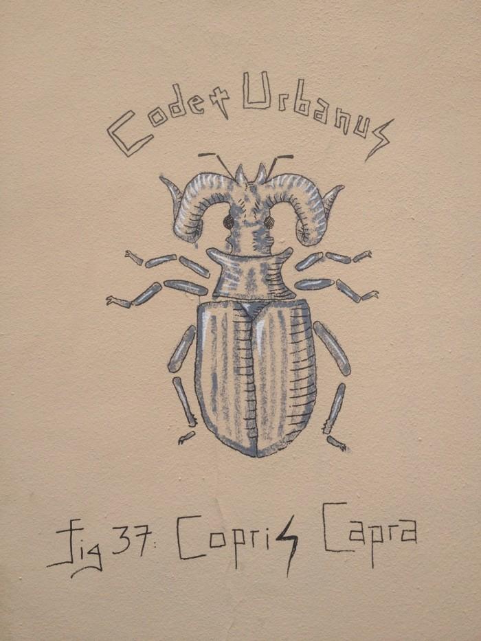 Copris Capra