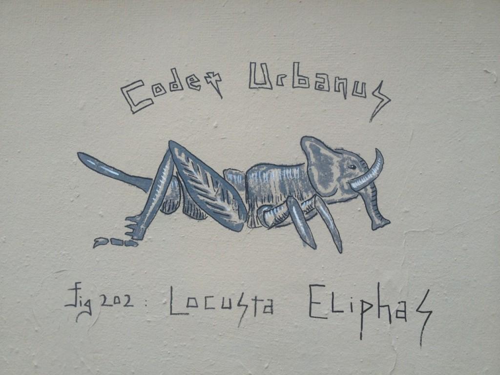 Locusta Eliphas