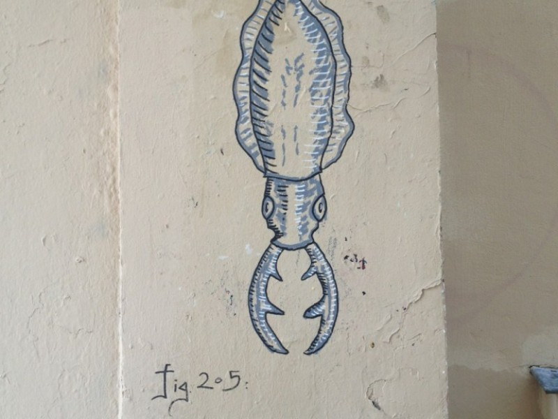 Sepia Cervus