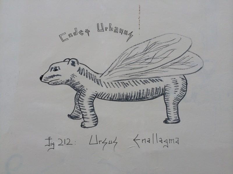 Ursus Enallagma