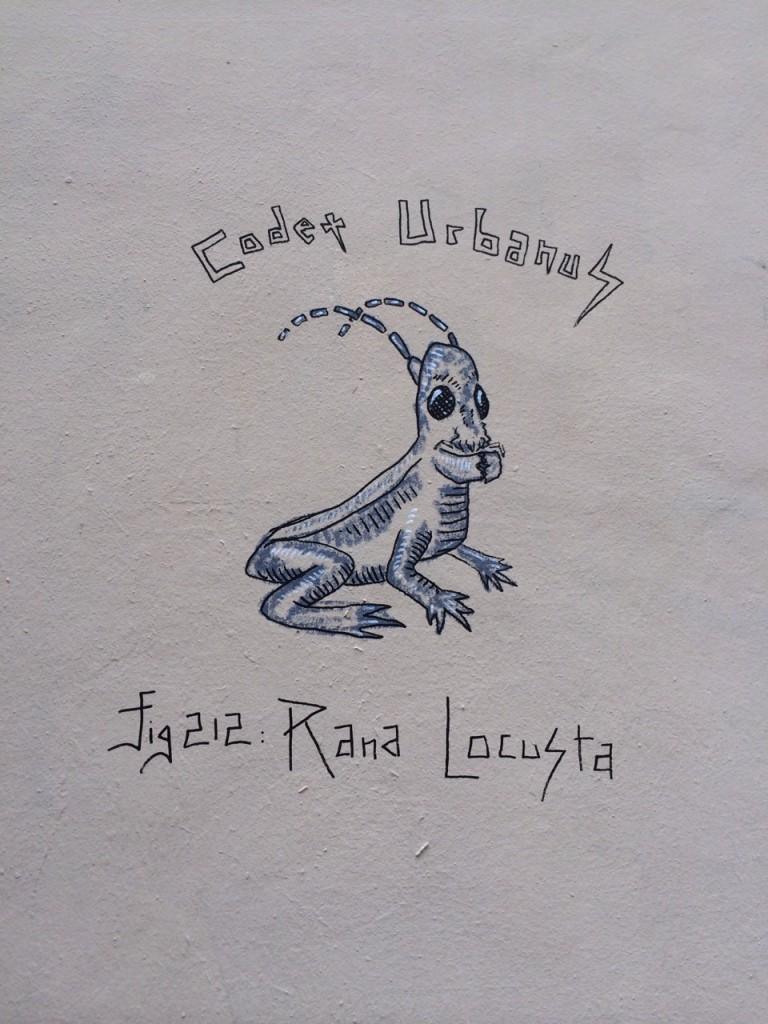 Rana Locusta