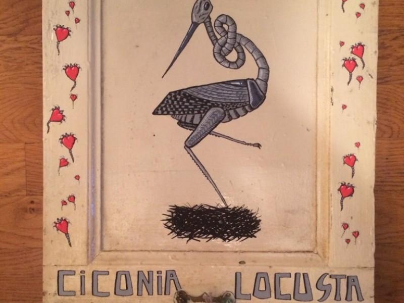 Ciconia Locusta