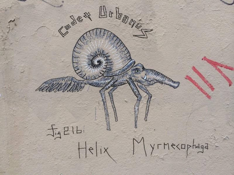 Helix Myrmecophaga