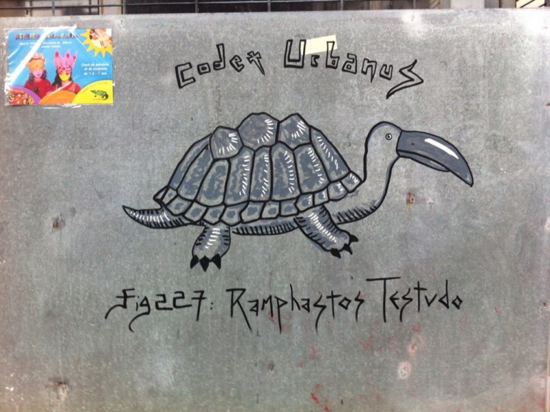 Ramphastos Testudo