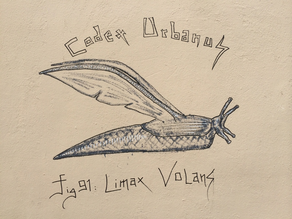 Limax Volans (2)