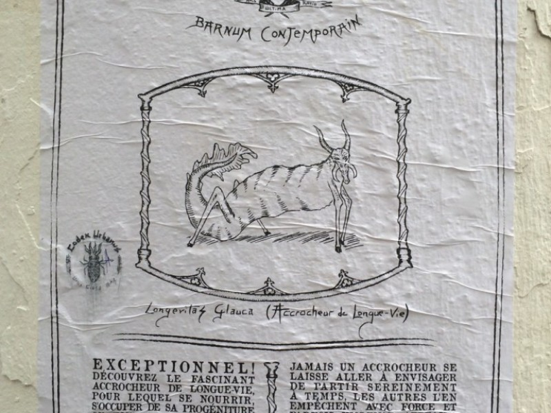 Codex Circus, Accrocheur de Longue-Vie