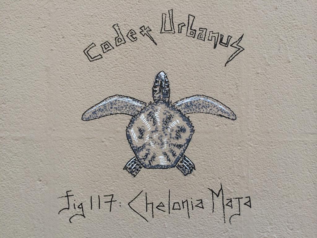 Chelonia Maja