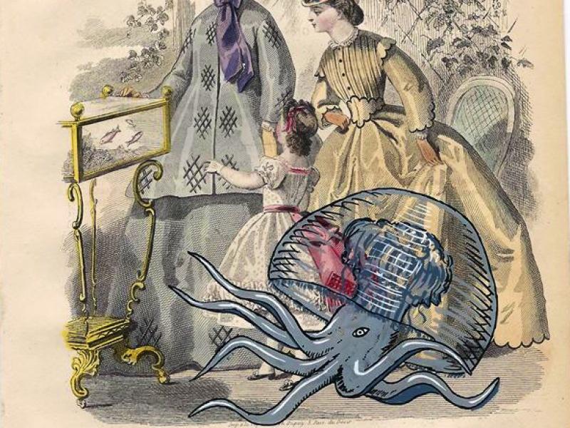 Medusa Octopus,Insectes & Arachnides