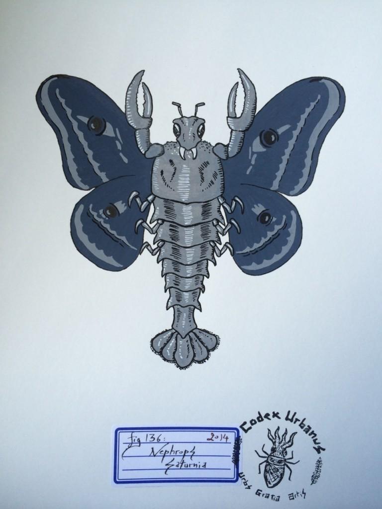 Nephrops Saturnia, Insectes & Arachnides
