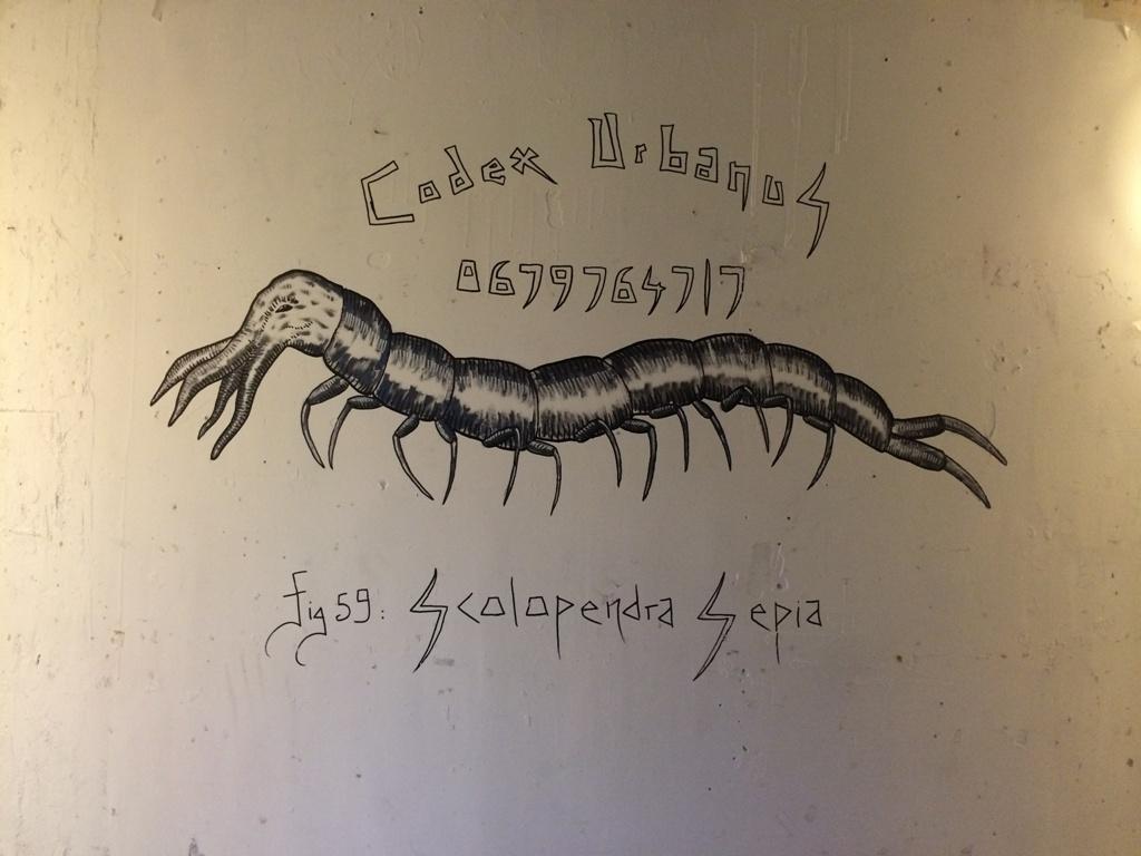 Scolopendra Sepia