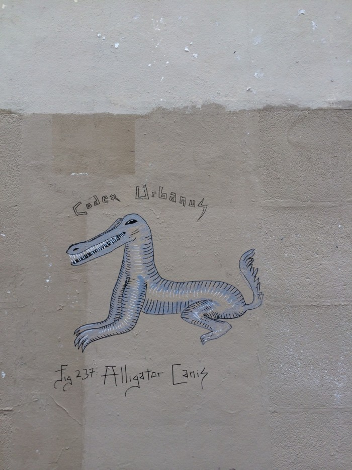 Alligator Canis