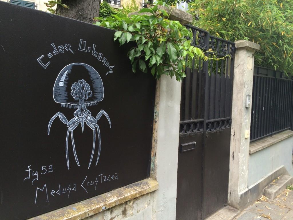 Medusa Crustacea
