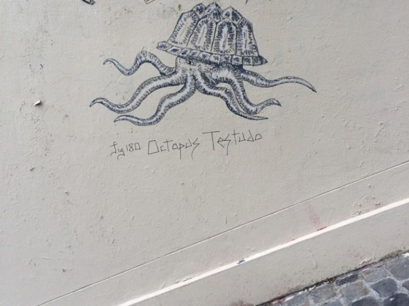 Octopus Testudo
