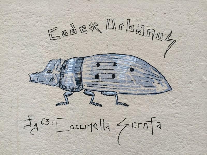 Coccinella Scrofa