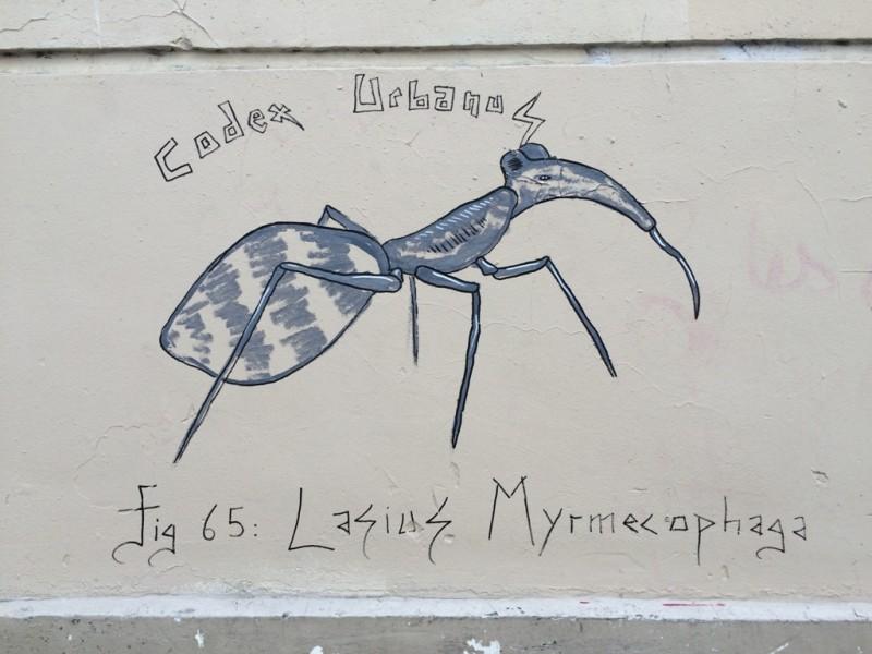 Lasius Myrmecophaga