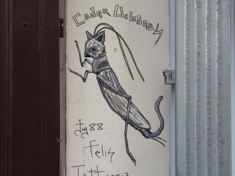 Felis Tettigonia