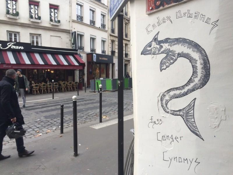 Conger Cynonys