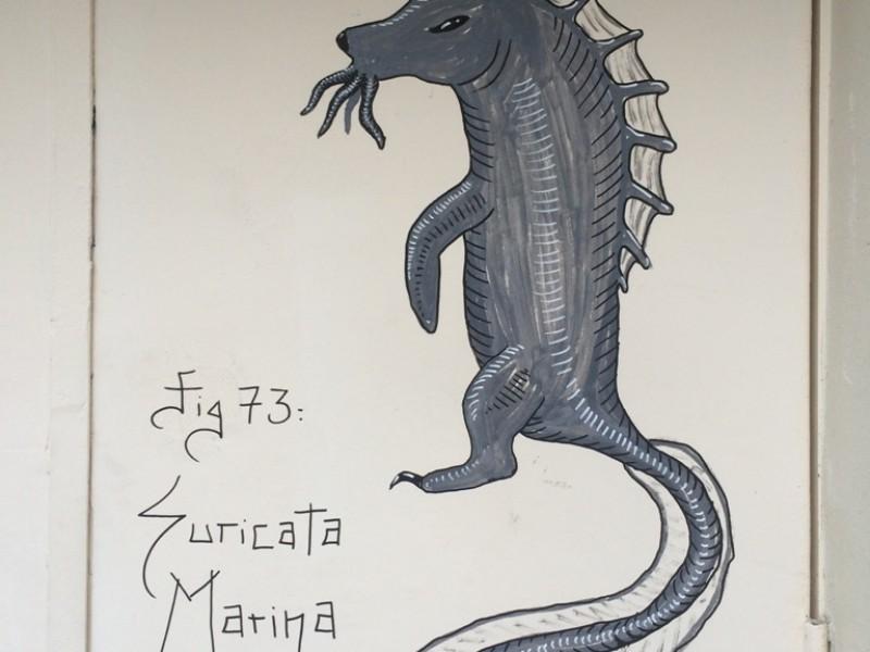 Suricata Marina