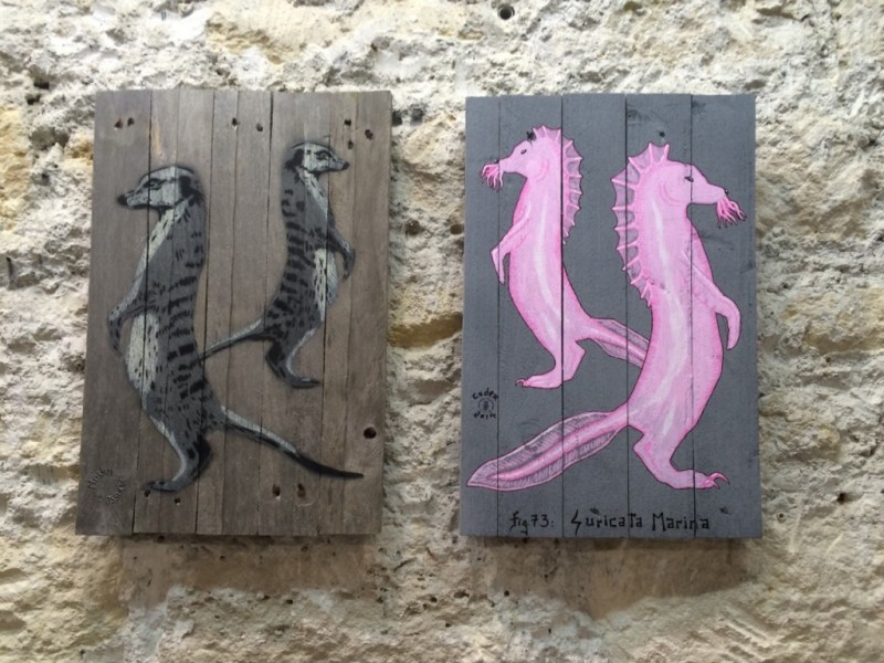 Duel de suricates