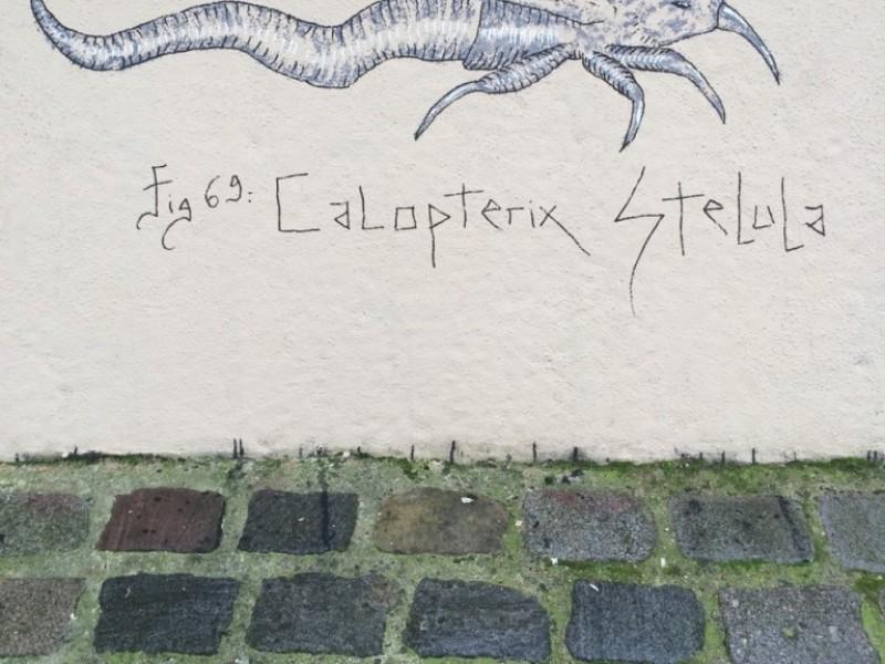 Calopteryx Stelula
