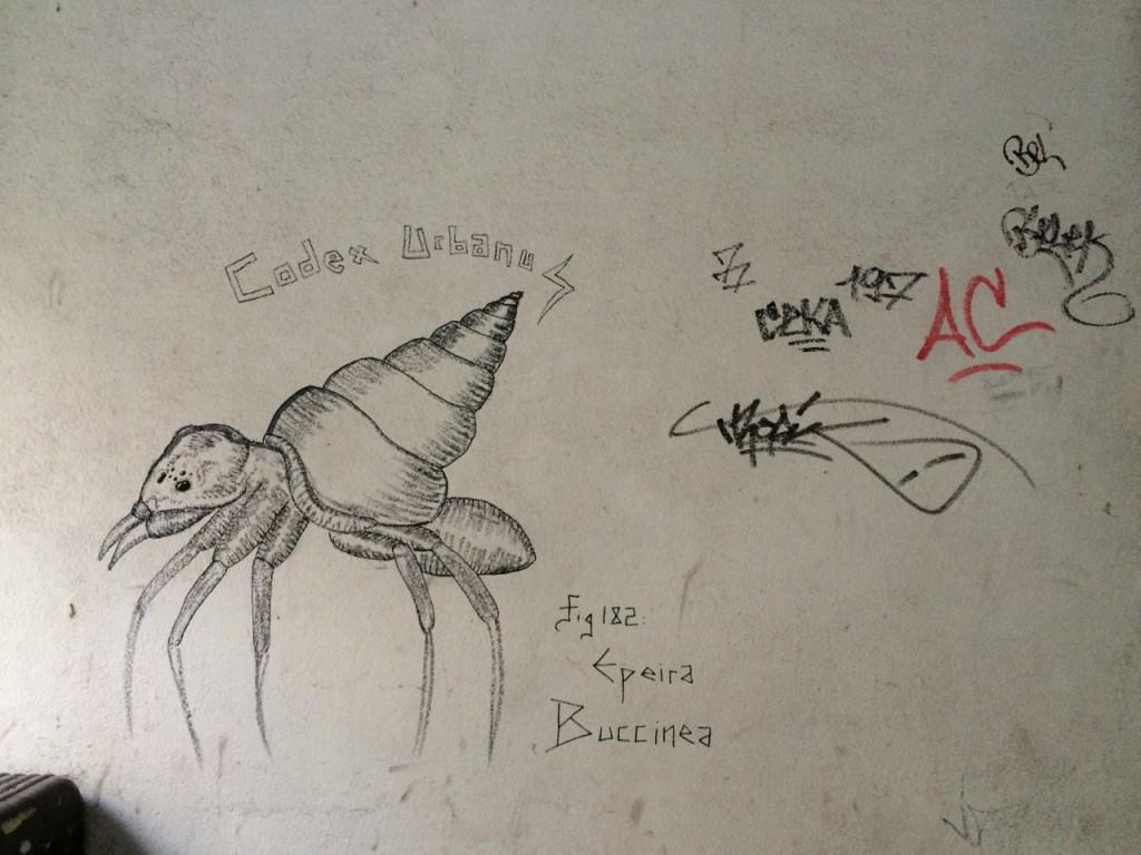 Epeira Buccinea