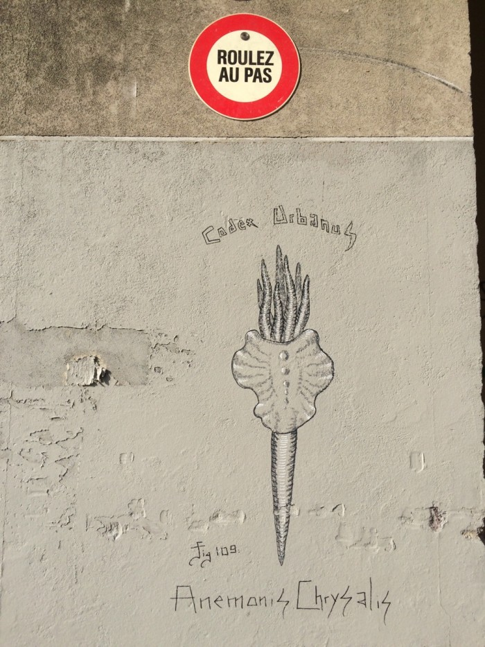 Anemonis Chrysalis