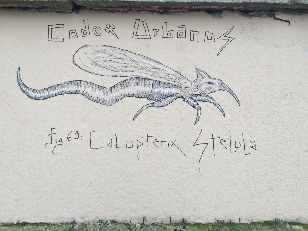 Calopterix Stelula