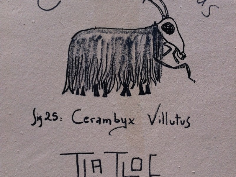 Cerambix Villutus by Tlatloc