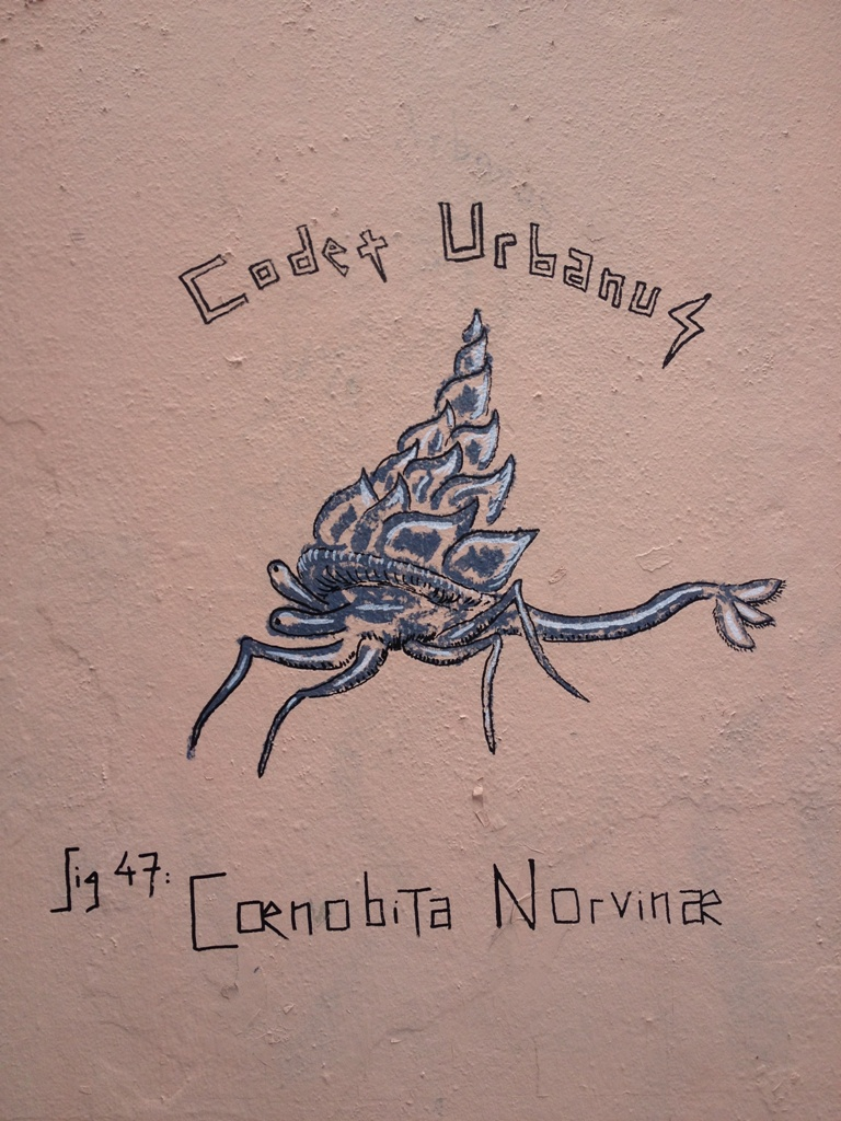 Coenobita Norvinae
