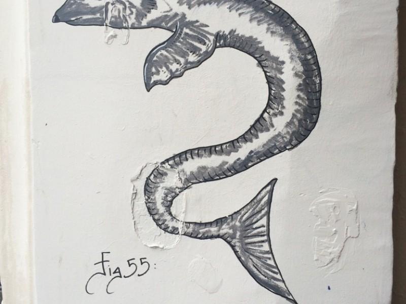 Conger Cyromys