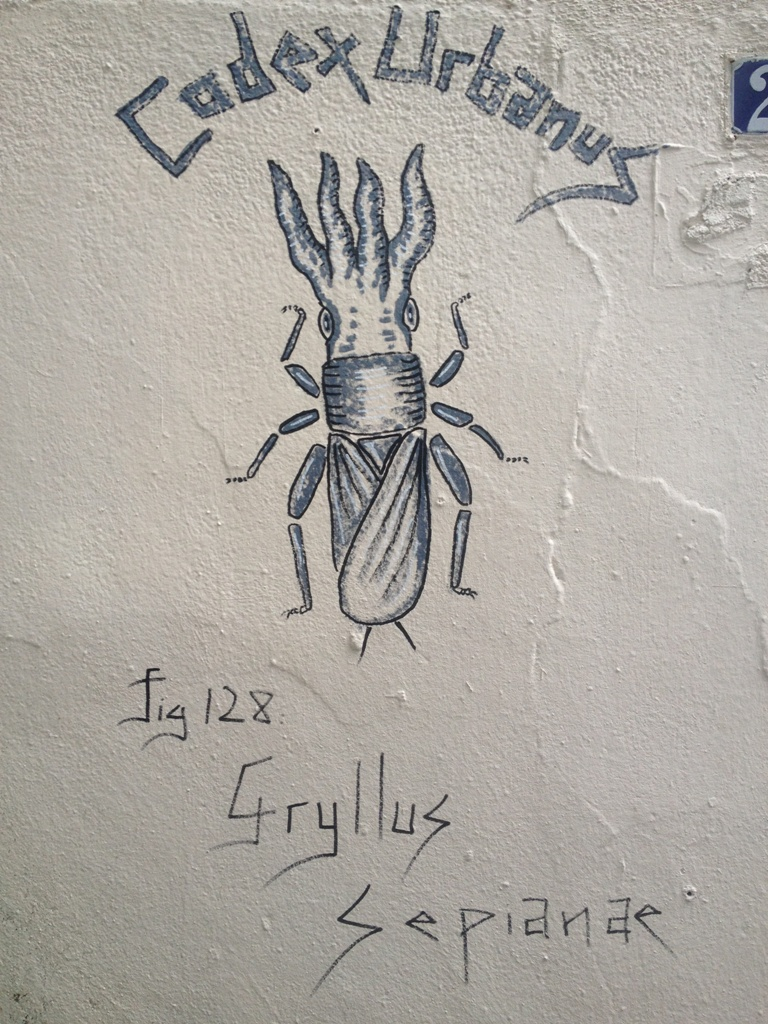 Gryllus Sepianae
