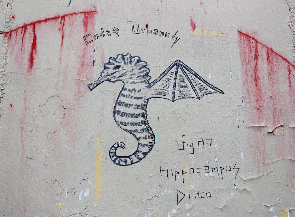 Hippocampus Draco