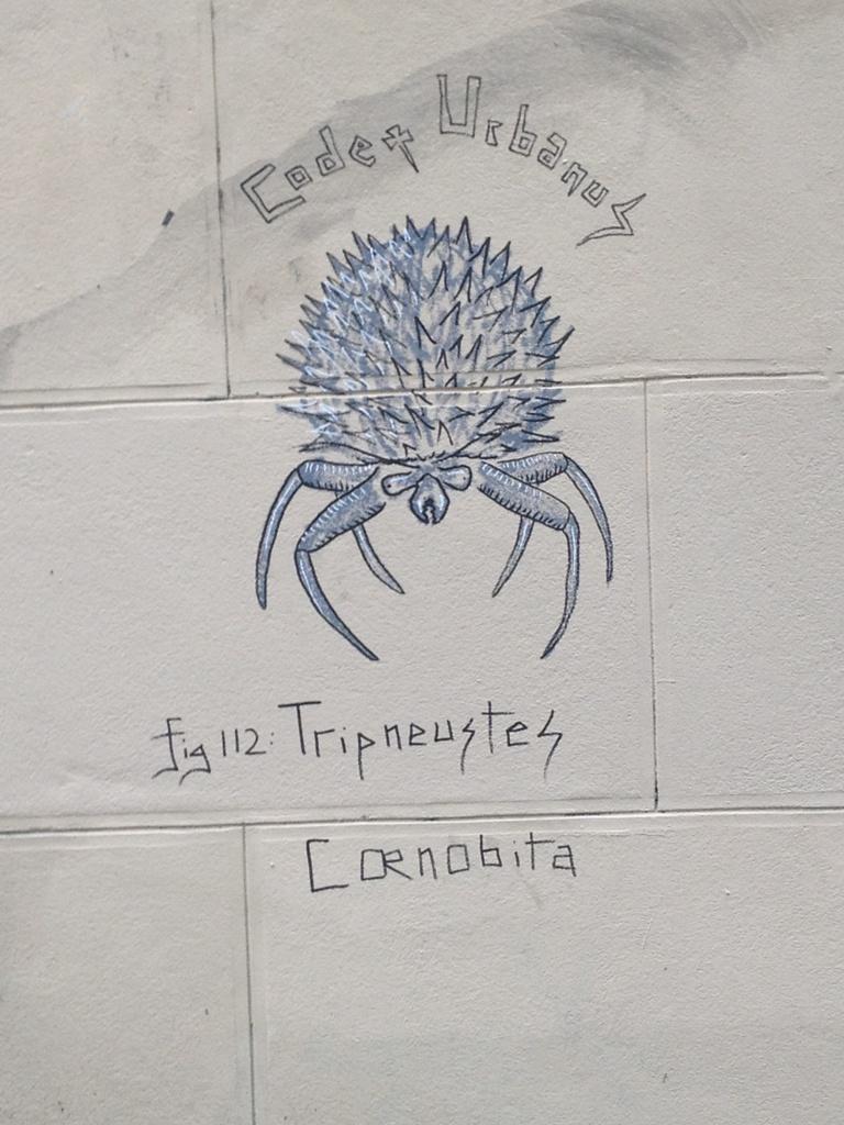 Tripneustes Coenobita